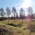 Uusi nurmikko tehtiin ja kylvettiin Harjulan omalle pellolle