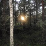 Aurinko pilkahti laavuretkeläisille ennen laskemistaan.